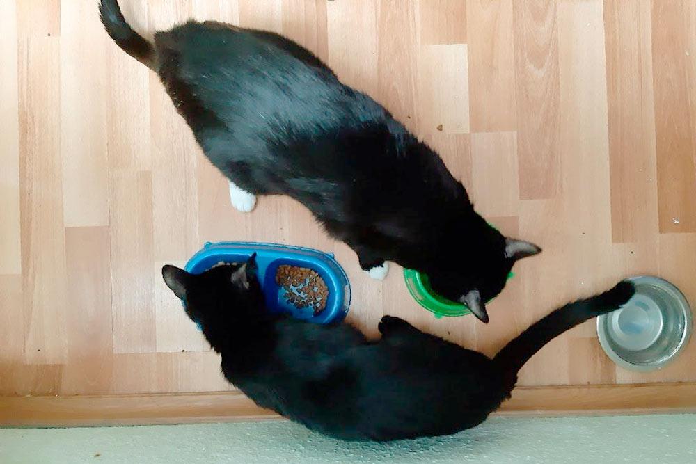 Коты завтракают раньше нас