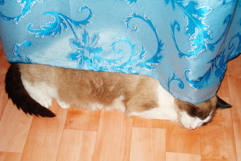 Кот прожил с нами 17 лет. Очень любил спать около батареи. А однажды даже залез туда мордой и застрял. Еле вытащила