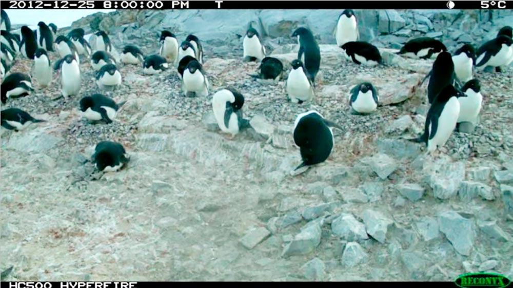 Так выглядят фотографии, на которых ученые пытаются считать пингвинов. Это важная экологическая задача