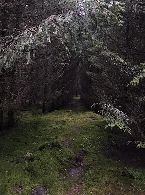 Так выглядят охотничьи тропы Фридриха Вильгельма