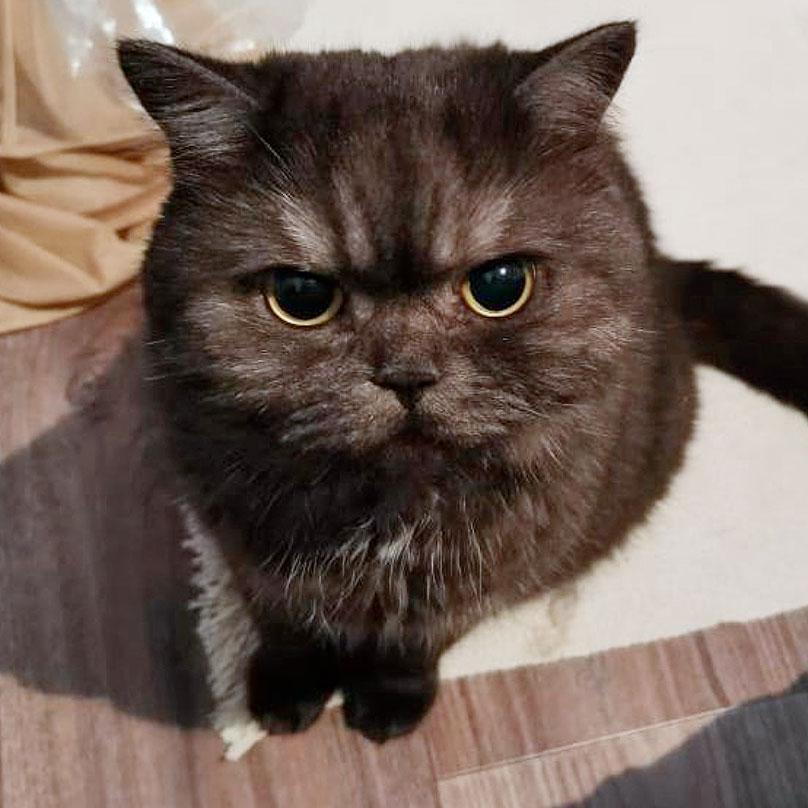 Кот моего сына