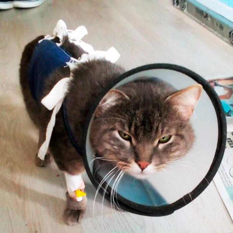 Кот максимально недоволен всем, что с ним делают