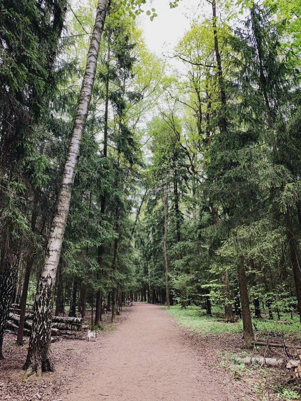 Дляпрогулок у нас два маршрута: вдоль шоссе и по дворам. Обычно выбираем второй. Когда времени больше, доходим до этого леса