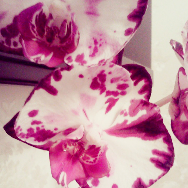 Из цветов у меня остались только орхидеи. От остальных пришлось избавиться, потомучто их съедает кот