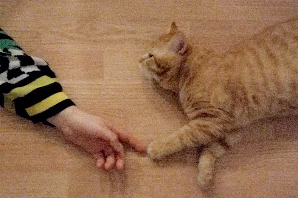 Кота зовут Пиклз