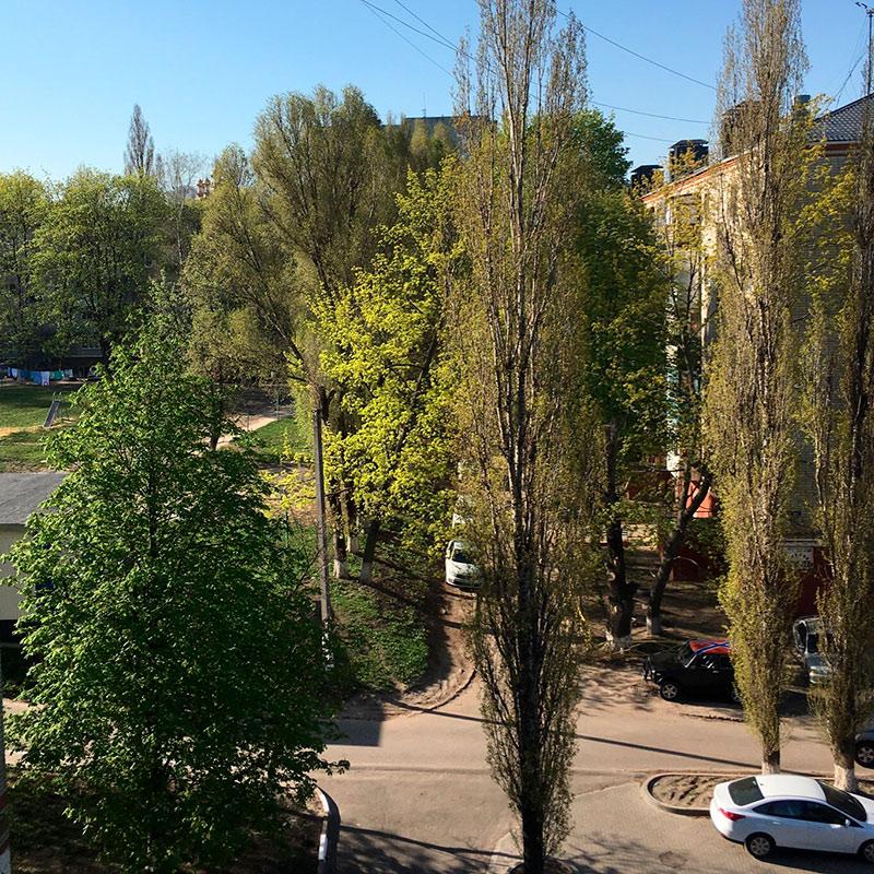 Хотя и нужно уже бежать, не могу не сфотографировать вид из окна. Какже я люблю эти деревья!