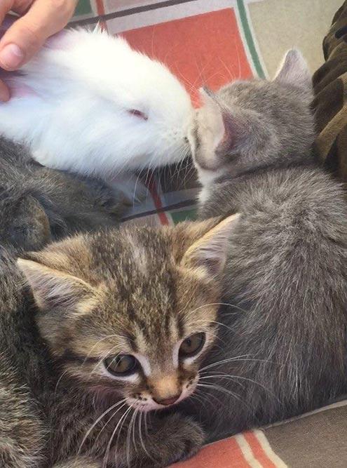 Кролики икотята вдоме умоих родителей