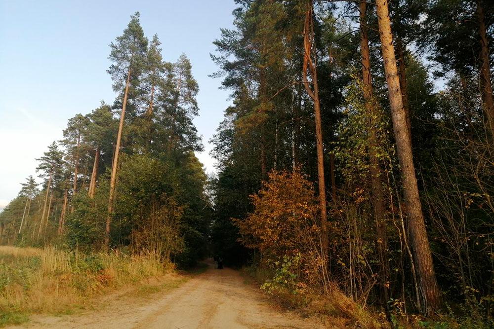 Лес начал золотиться, а воздух прозрачный и звонкий