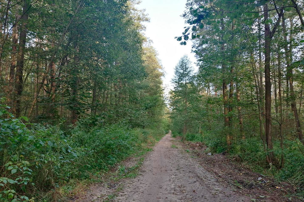 Лес — это мое успокоение, ресурс и вдохновение