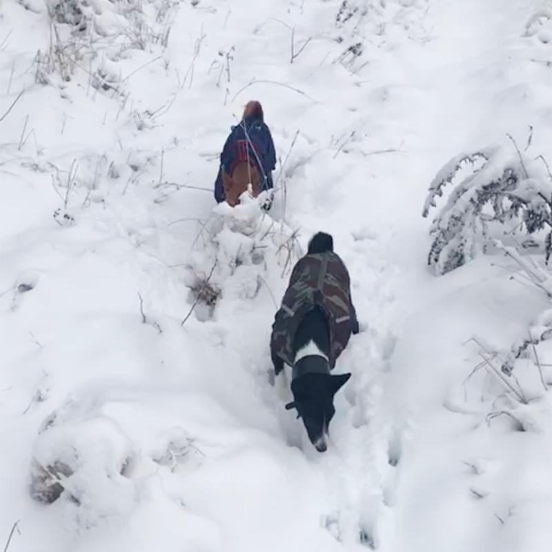 Родители присылают видео, как они гуляют с собаками по заснеженному полю