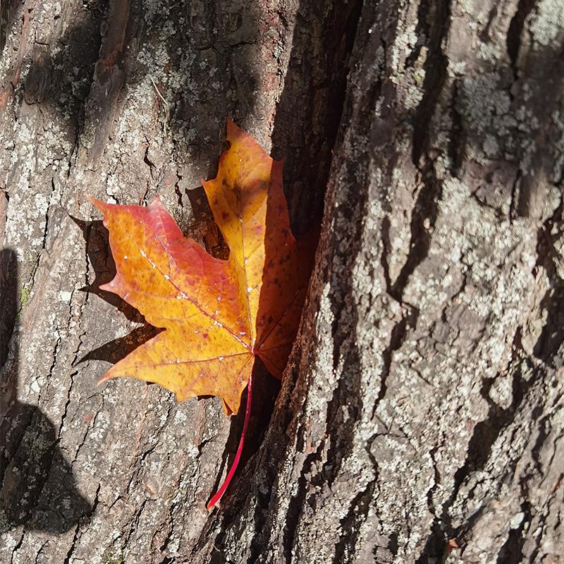 Очень красиво в Царском Селе осенью