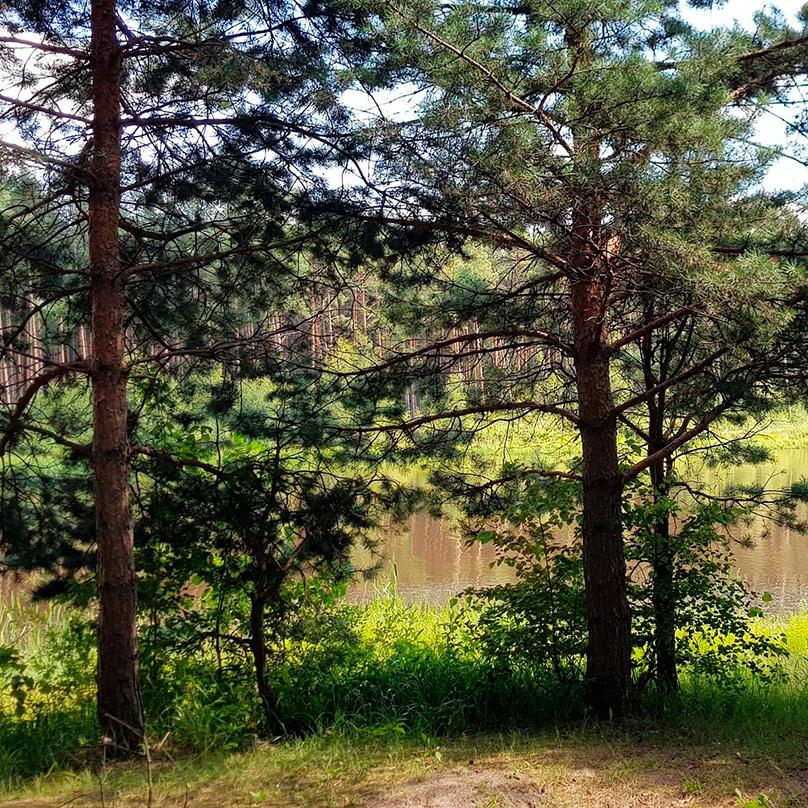В парке чистейший воздух, много деревьев, есть пруд