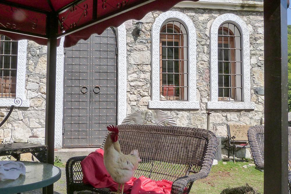 Мы заметили на заднем дворе местного петуха, который отдыхал в теньке на садовой мебели