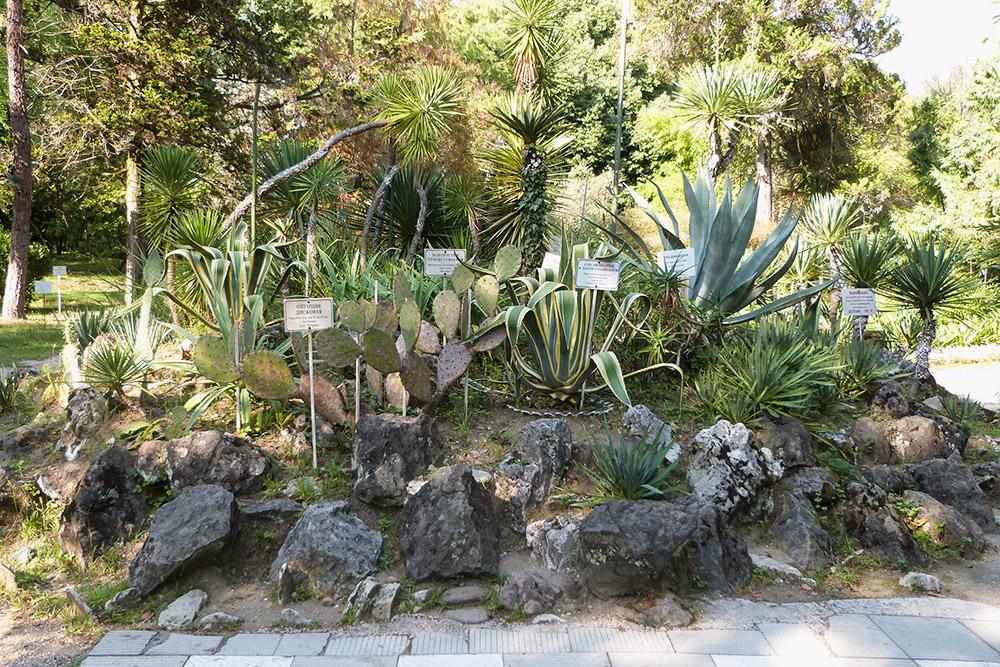 Зона кактусов оформлена альпийской горкой с табличками