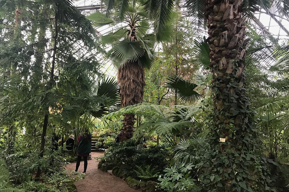 В оранжереях Ботсада есть настоящий пальмовый лес