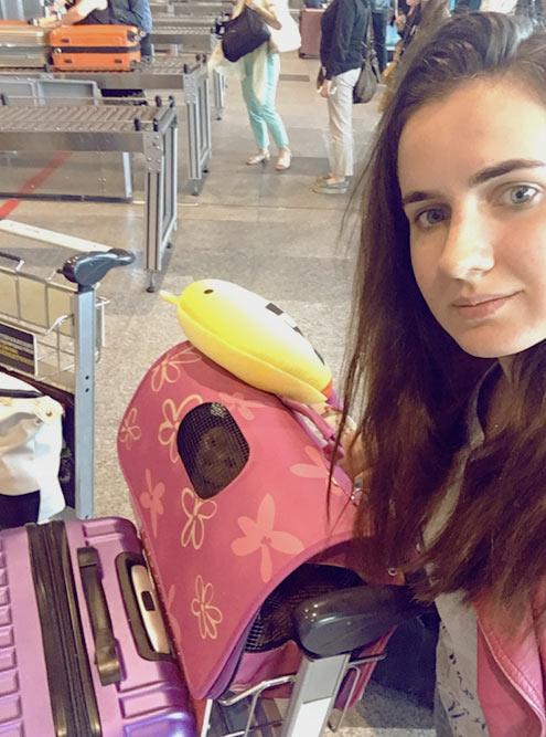 Тележка с чемоданом и кошкой в переноске — я просто Гарри Поттер на платформе 9¾