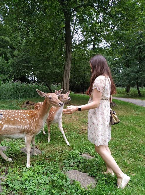 Wildpark, где животные ходят где хотят, а люди — только по обозначенным тропинкам