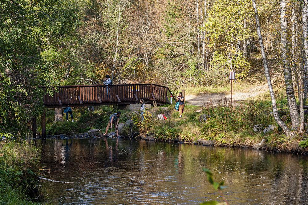 Мост через Волчью речку, рядом находится ручей Горюнец. По обеим сторонам есть места для пикника, а через ручей перекинуты два моста