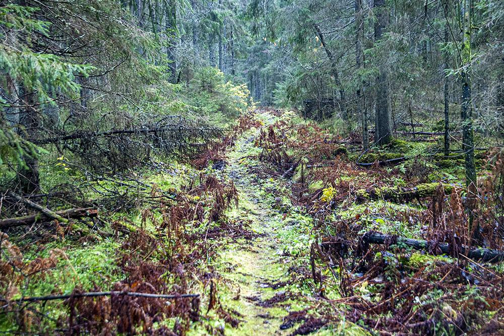 Основная часть тропы проходит через густой лес. Это была единственная экотропа, где нам не повстречался ни один человек