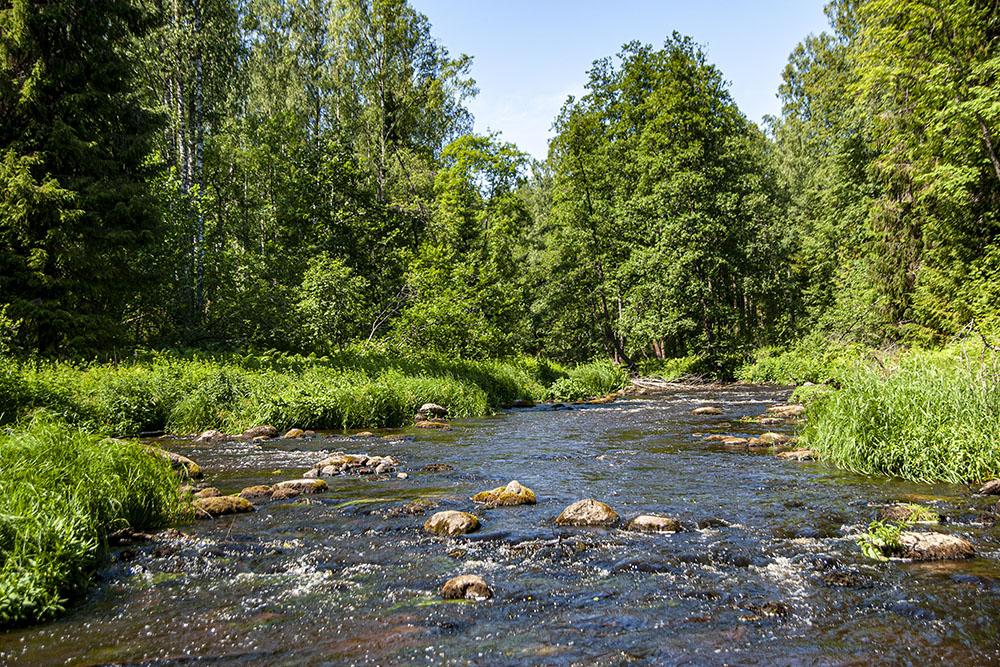 Большая часть тропы идет вдоль реки Рощинки
