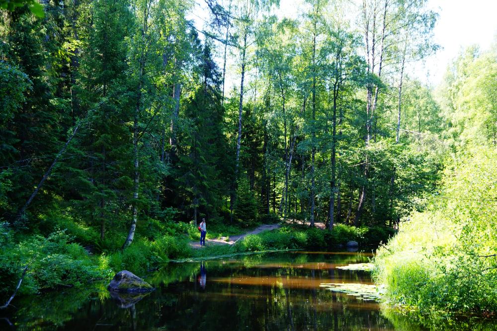 Тропа вдоль речки живописная: там высокие деревья, каменистое русло с валунами и темная вода