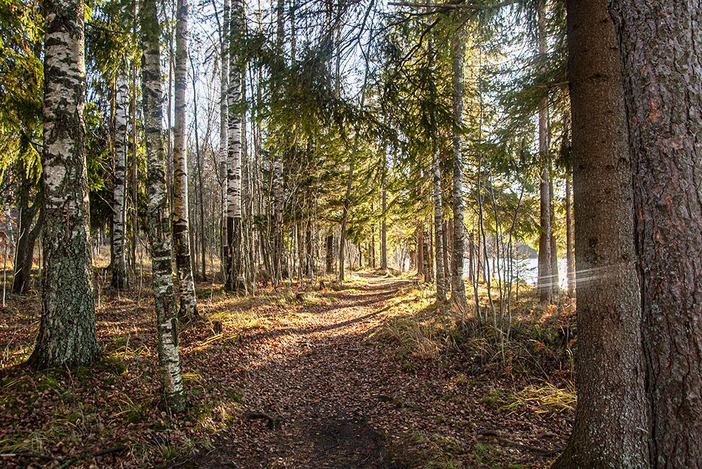 Путь вдоль озера частично идет по тропам, а в остальных местах — по дороге