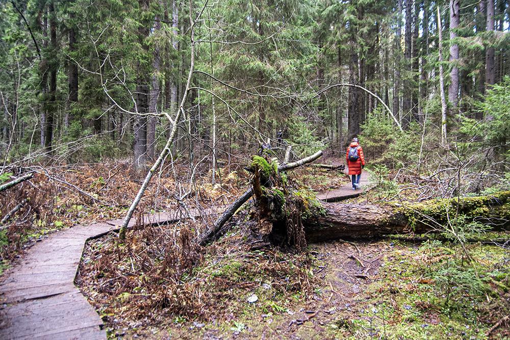 Для удобства посетителей на части маршрута проложен деревянный настил