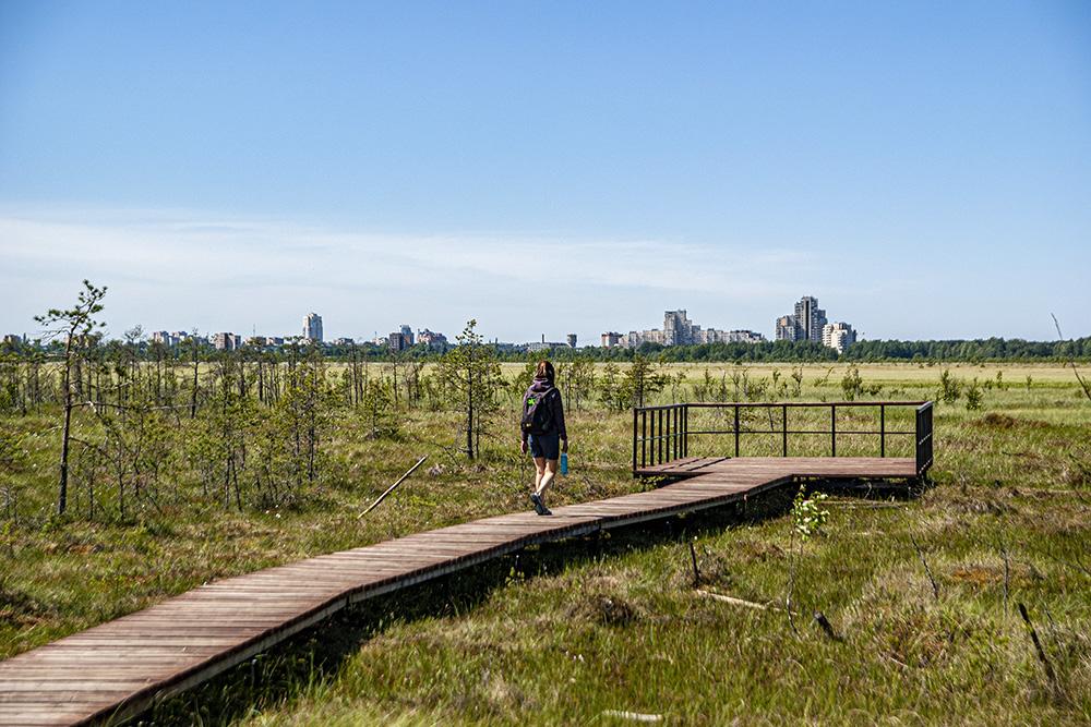 С болота открывается вид на Сестрорецк