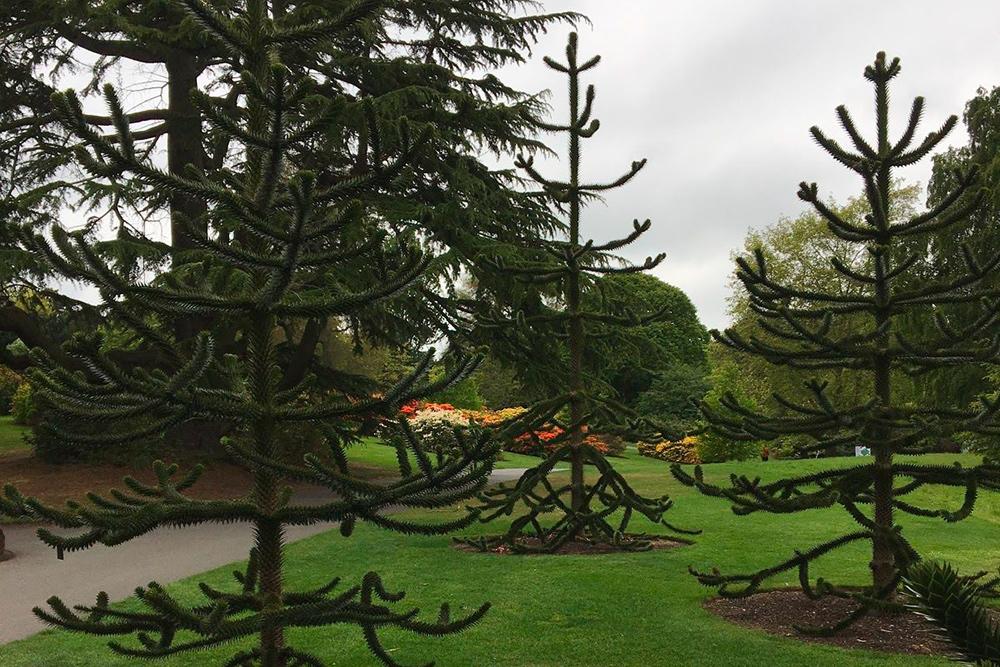 Королевский ботанический сад Эдинбурга