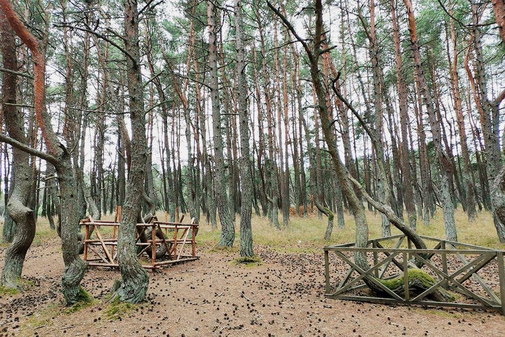 Танцующий лес. Все деревья огорожены: слишком много туристов хотели с ними потанцевать