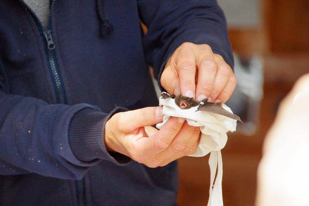 Летучую мышь спрятали в мешочек до ночи. Выпустить ее днем — все равно что выгнать человека из дома в 3 часа утра