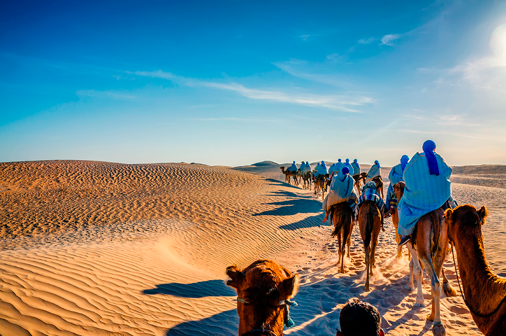 В Сахаре можно прокатиться на верблюде. Источник: Dmitry Eagle Orlov / Shutterstock
