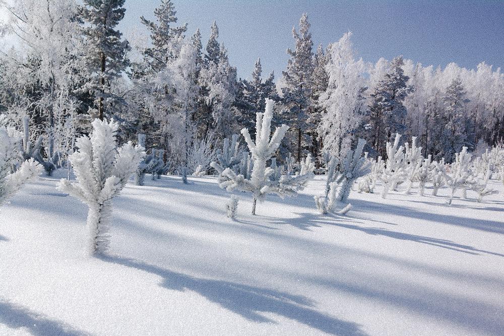 В Шерегеше особенный снег — пухляк — и много мест для фрирайда. А каждый сезон заканчивается фестивалем «Грелка-фест», знаменитым своим спуском в купальниках