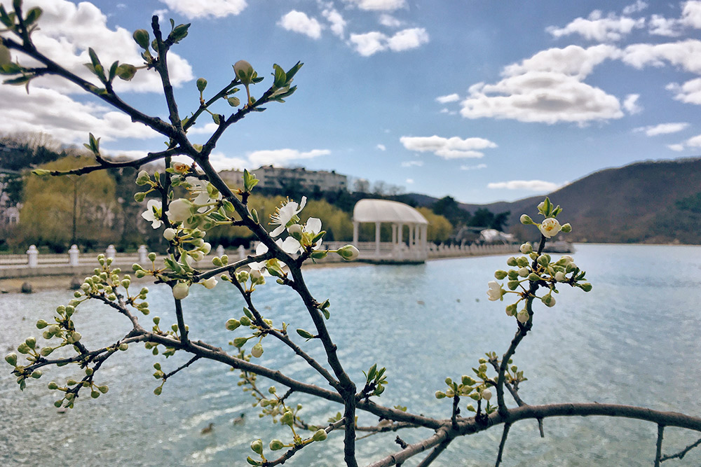 В конце марта вдоль тропы начинают расцветать деревья. Цветущая алыча на юге России — домашний вариант японской сакуры. Все вокруг усыпано белыми лепестками
