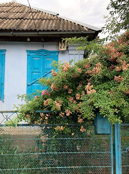 Типичный дом в Каменномостском. Почти у каждого дома — сад с цветами и фруктовыми деревьями