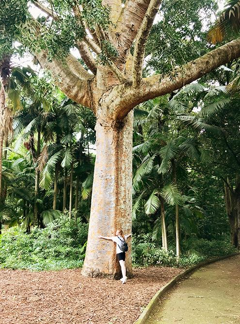 Некоторые деревья в ботаническом саду «Жозе-ду-Канту» нереальных размеров