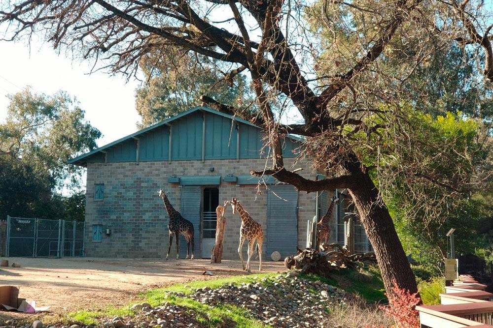 В зоопарке есть зоны отдыха и бесплатные развлечения для детей и взрослых. Можно сделать что-то своими руками под присмотром волонтера парка