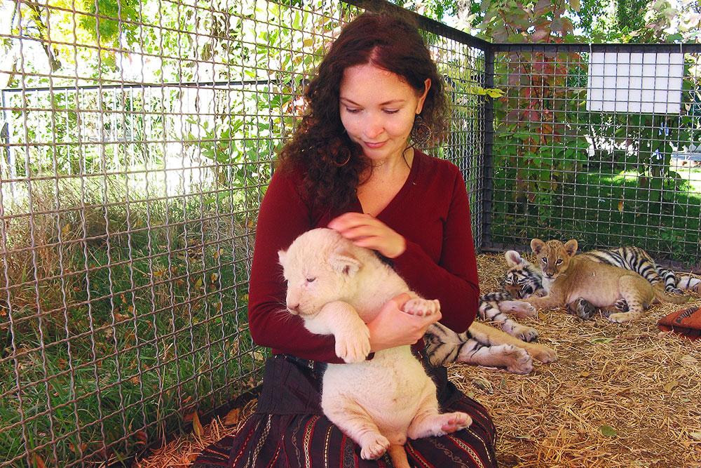 В «Тайгане» живут и размножаются и обычные, и редкие белые львы
