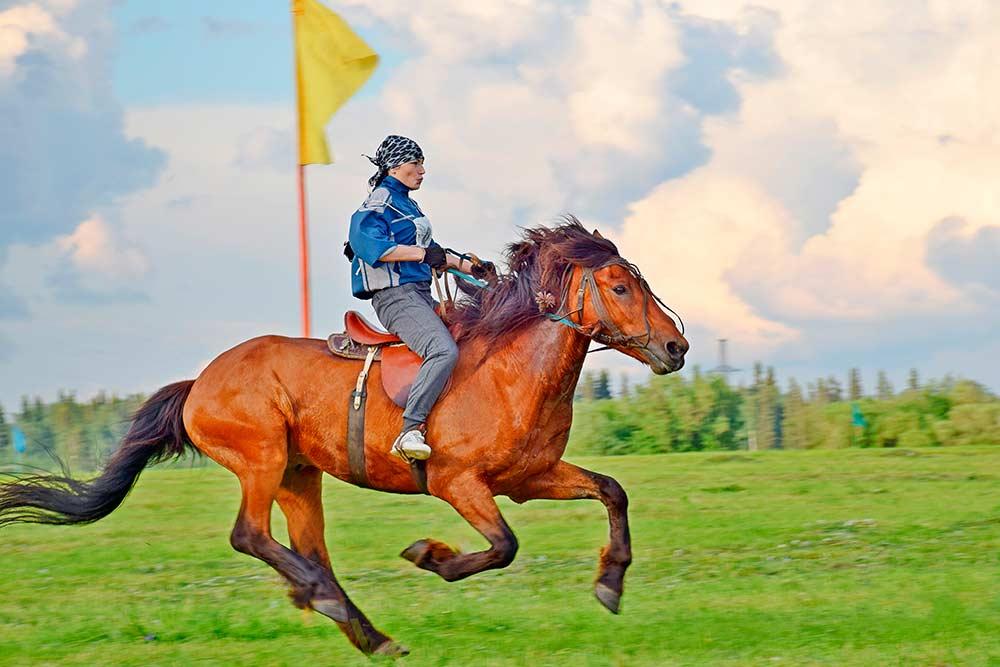 В гонках в основном участвуют не ездовые, а рабочие лошади, которых в обычное время используют в сельском хозяйстве. Но есть и породистые скакуны. Источник: Павел Канев