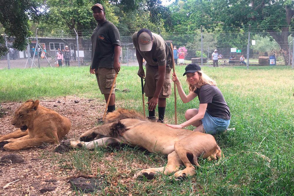 Львов дрессируют таким образом, чтобы они думали: у кого палка, тот и хозяин