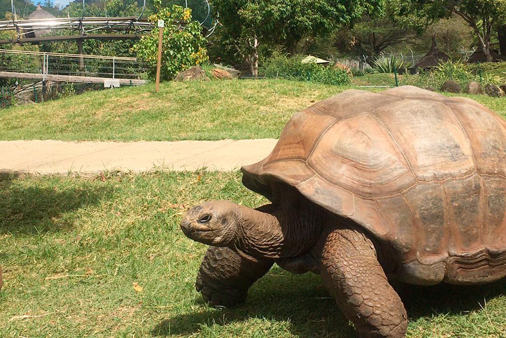 Одна из достопримечательностей — самая старая черепаха заповедника Джордж. По словам работника парка, ему больше 150 лет