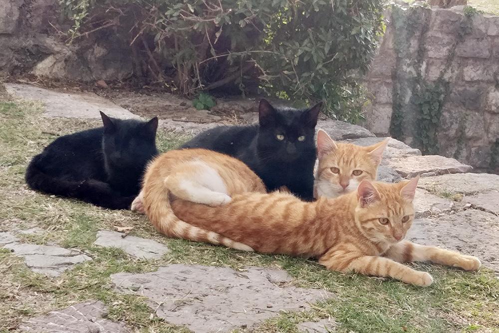 В Черногории кошки чувствуют себя вольготно: их можно встретить где угодно, даже в самых высоких горах