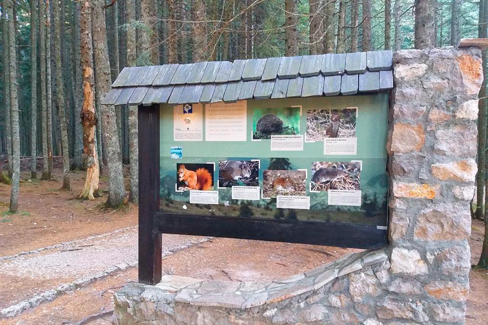 Стенды с фотографиями животных, которых можно увидеть в парке