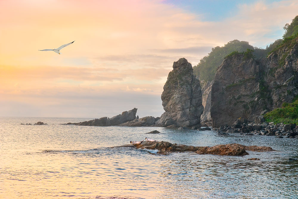 На многих побережьях Приморья — скалы причудливых форм. Источник: Nickolai Repnitskii / shutterstock.com
