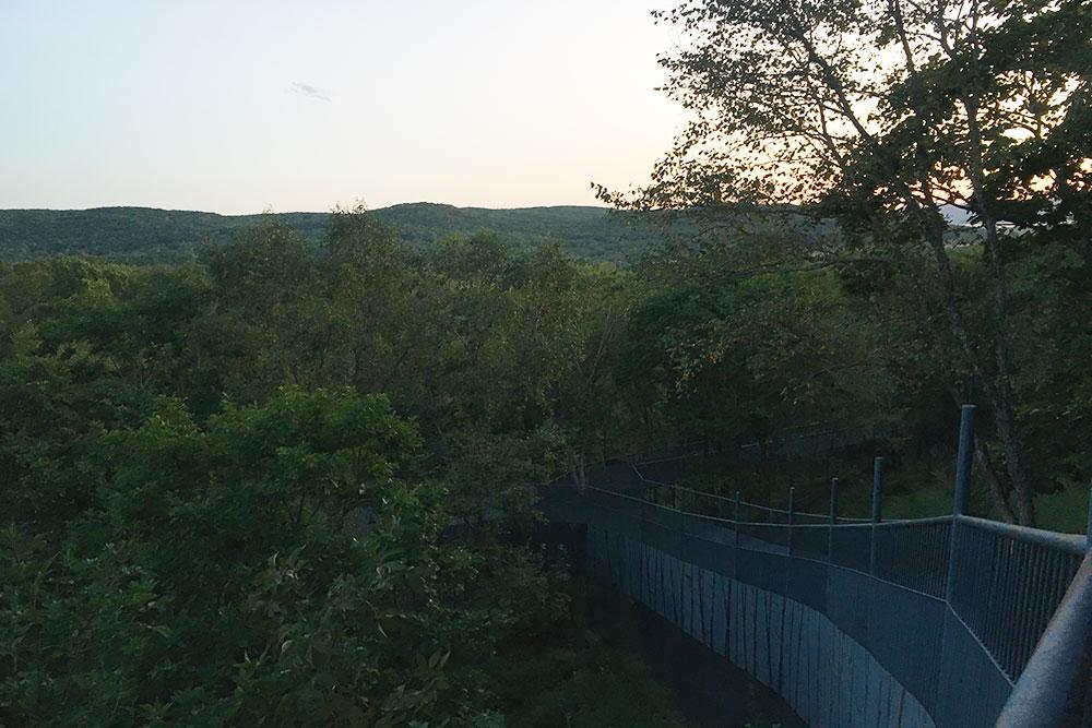 Так выглядят дорожки в сафари-парке. Туристы смотрят на животных сверху