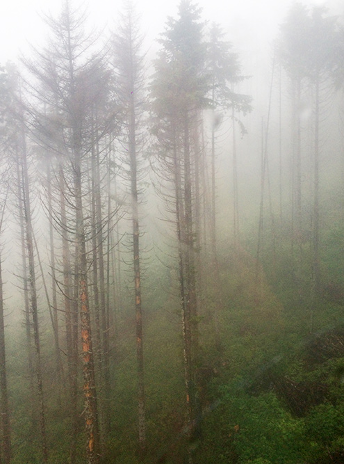 Вид из кабины подъемника. В сезон дождей на острове сильные туманы
