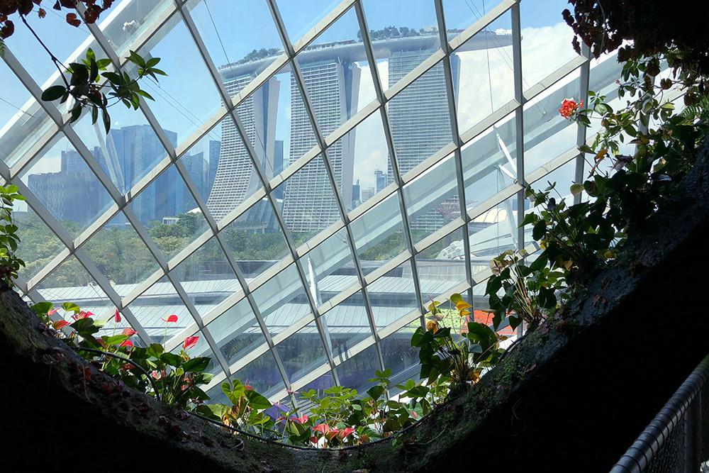 Вид на отель с мостика в «Облачном лесу»