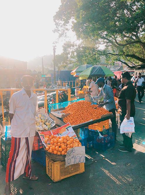 На Шри-Ланке мандарины продают поштучно. В Канди шесть мандаринов стоят 100 Rs (39<span class=ruble>Р</span>), в туристической Хиккадуве за эту цену предлагали четыре фрукта