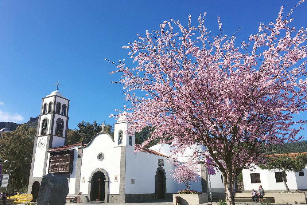 В Сантьяго-дель-Тейде цветет миндаль. Там я узнала, что у меня на него аллергия