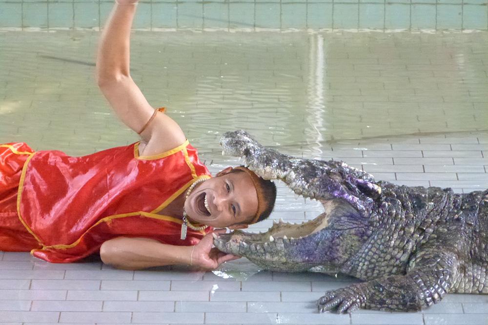 Шоу на крокодиловой ферме в Паттайе пощекочет нервы